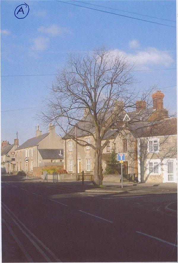 Photo of Willow tree