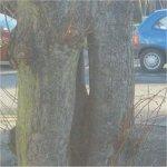 Photo 4 of Willow tree