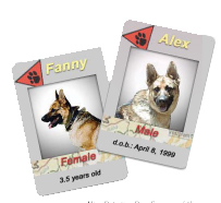 Fanny and Alex Cards