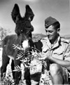 Private P.T. Leachman with donkey mascot