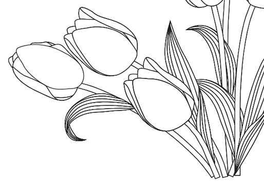 Tulip Colouring Sheet