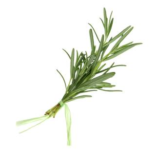 Rosemary: Remembrance