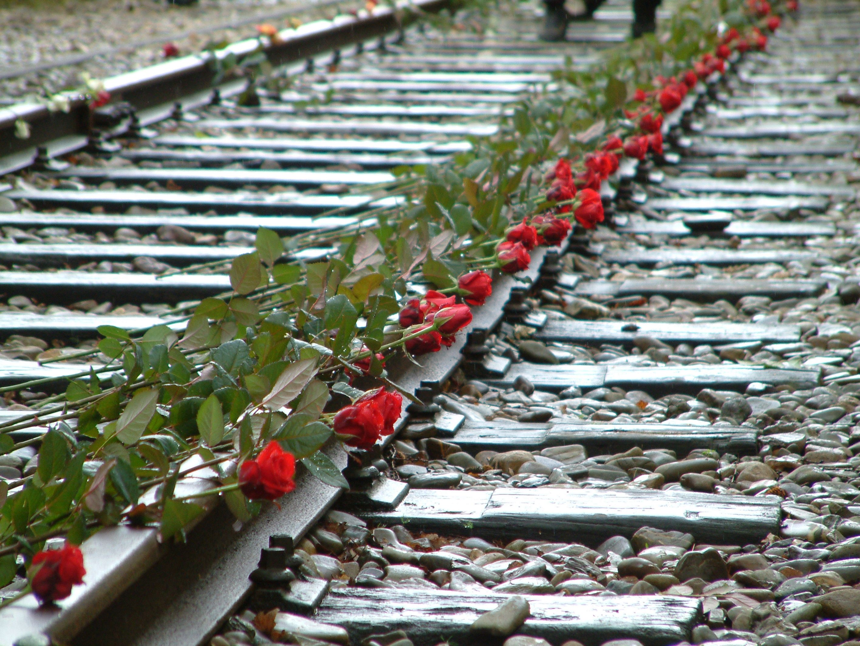 roses on the railway ties at Westerbork