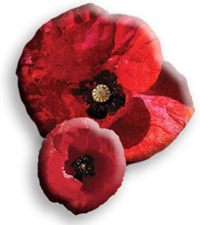 Image of two poppies